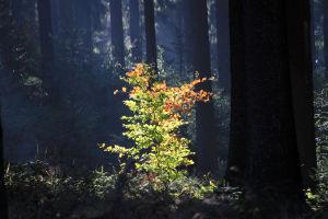 DunkelsteinerWald017