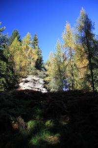DunkelsteinerWald045