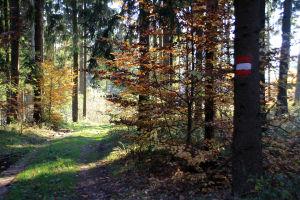 DunkelsteinerWald131