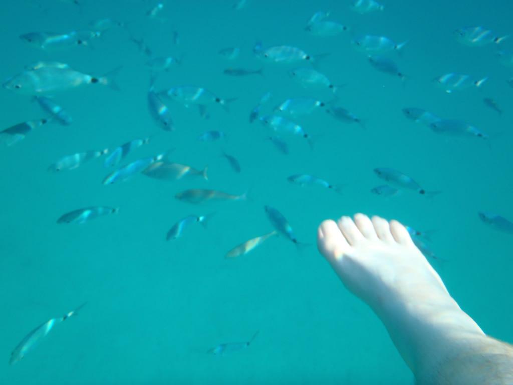 Fischbesuch