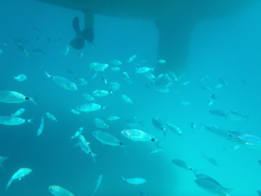 Fische unter Schiff