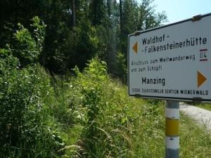 08_Hinein_in_den_Wald